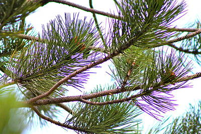 Photograph - Pine Needles by Pamela Walrath