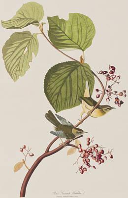 Warbler Painting - Pine Swamp Warbler by John James Audubon