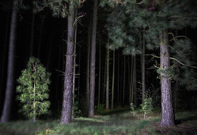 Newts Photograph - Pine Tree Forest At Night by Dirk Ercken