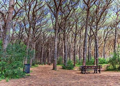 Photograph - Pinewood Forest, Cecina, Tuscany, Italy by Elenarts - Elena Duvernay photo