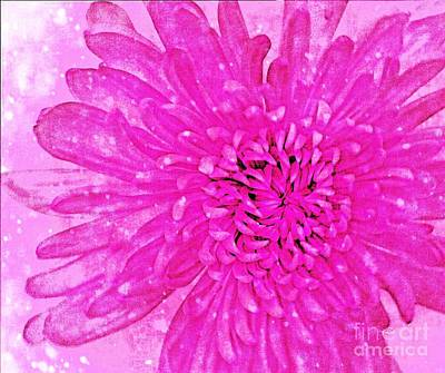 Photograph - Pink Beauty by Rachel Hannah
