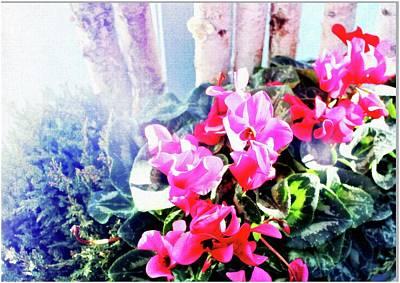 Digital Art - Pink Cyclamen by Mindy Newman