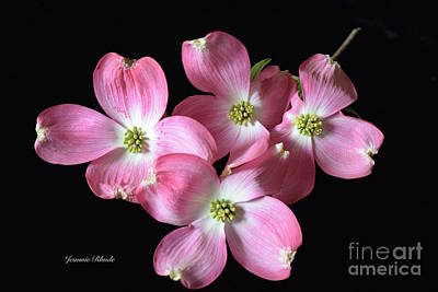 Pink Dogwood Branch Art Print by Jeannie Rhode