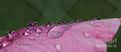 Photograph - Pink Droplets by Yumi Johnson