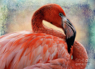 Photograph - Pink Flamingo 1 by Bob Christopher