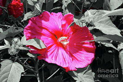 Photograph - Pink Flower by Inspirational Photo Creations Audrey Taylor