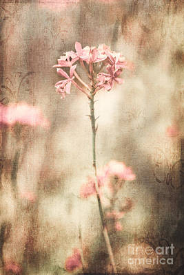 Photograph - Pink Flower Canvas by Alissa Beth Photography