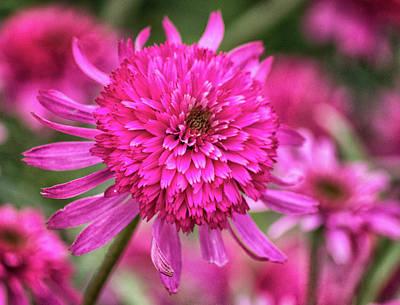 Spa Art Photograph - Pink Flower by Martin Newman