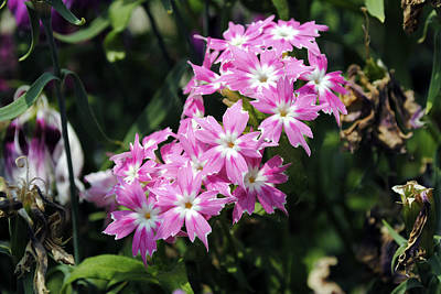 Spot Of Tea Royalty Free Images - Pink Flowers Royalty-Free Image by Sumit Mehndiratta