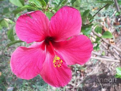 Pink Hibiscus Beauty Art Print