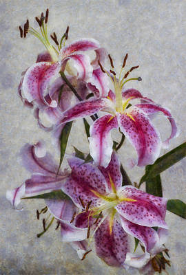Photograph - Pink Lillies by Ian Mitchell