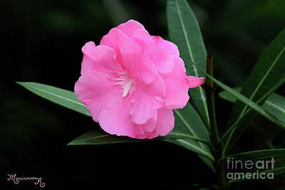 Photograph - Pink Oleander by Mariarosa Rockefeller