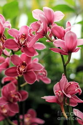 Photograph - Pink Orchid by Angela Rath