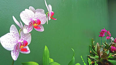 Photograph - Pink Orchids In The Hothouse by Nareeta Martin