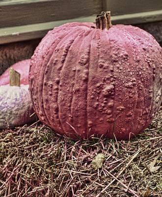 Photograph - Pumpkin Pinks by JAMART Photography