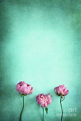 Photograph - Pink Peonies  by Stephanie Frey