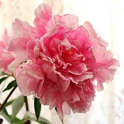 Photograph - Pink Peony 2 by Katy Mei