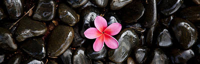Zen Rocks Photograph - Pink Plumeria Pebbles by Sean Davey