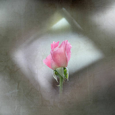 Photograph - Pink Rose Bud by Angie Vogel