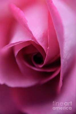 Photograph - Pink Rose Close Up by Terry Elniski