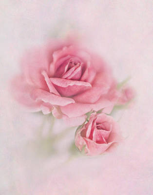 Photograph - Pink Rose by David and Carol Kelly