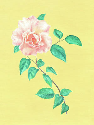 Drawing - Pink Rose by Elizabeth Lock