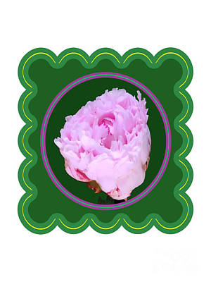 Photograph - Pink Rose Flower Floral Posters Photography And Graphic Fusion Art Navinjoshi Fineartamerica Pixels by Navin Joshi