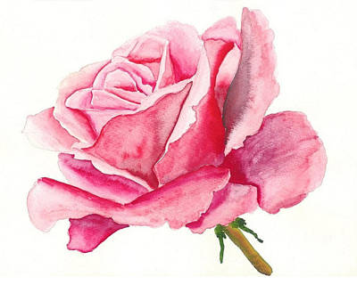 Pink Rose Art Print by Robert Thomaston