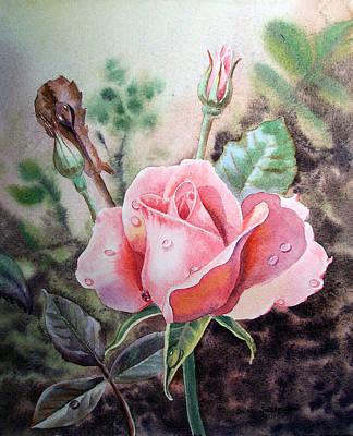 Comedian Drawings - Pink Rose with Dew Drops by Irina Sztukowski