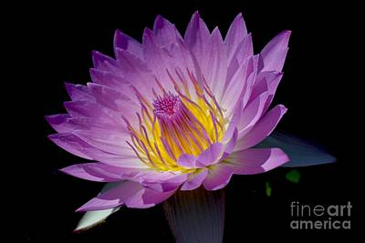 Photograph - Pink Sapphire by Jeannie Rhode