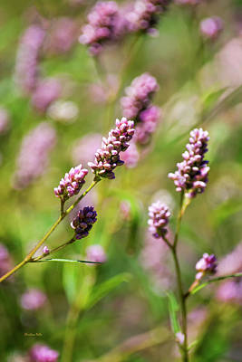 Photograph - Pink Smartweed Flower Art by Christina Rollo