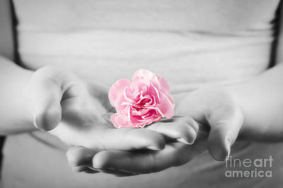 Girl Photograph - Pink Soft Flower In Woman Hands by Michal Bednarek