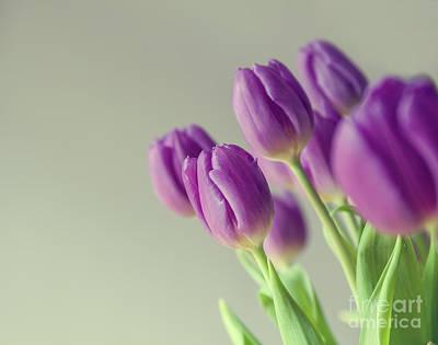 Pink Tulips Art Print by Patricia Hofmeester