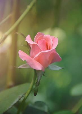 Photograph - Pinkest Pink by JAMART Photography