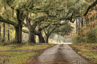Plantation Drive Live Oaks  Original