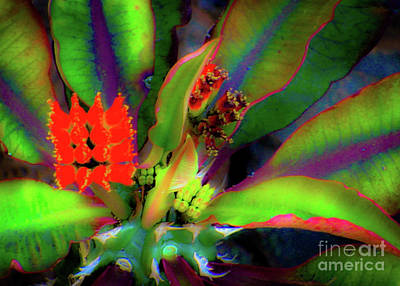 Art Print featuring the photograph Plants And Flowers In Hawaii by D Davila