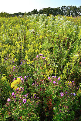 Photograph - Pleasant Valley Wildflowers by Ray Mathis