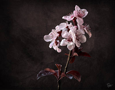 Photograph - Plum Flowers by Endre Balogh