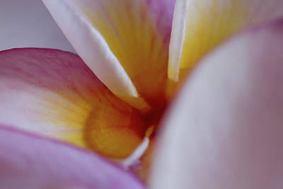 Photograph - Plumeria by Roger Mullenhour