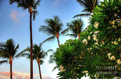 Photograph - Plumerias And Palms by Kelly Wade