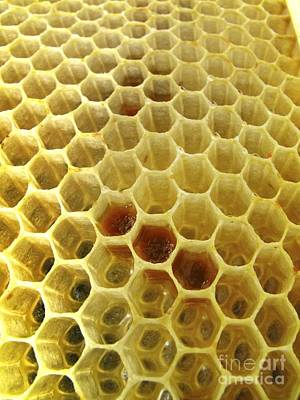 Photograph - Pollen In Wax Honeycomb Cells by Cordelia Molloy