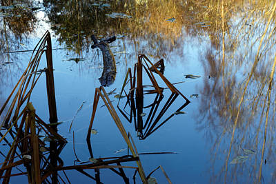 Photograph - Pond by David Harding