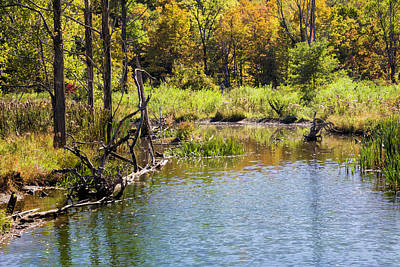 Photograph - Pond In Autumn by Fran Gallogly