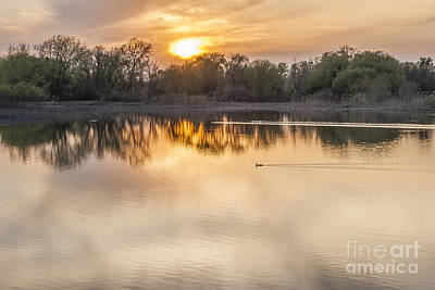 Photograph - Pond Life by Scott Wood