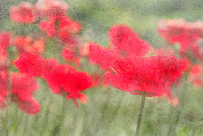 Photograph - Poppies by Catherine Alfidi