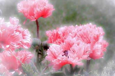 Photograph - Poppies by Jill Smith