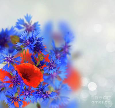 Photograph - Poppy And Cornflowers by Anastasy Yarmolovich