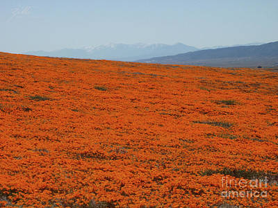 Photograph - Poppy Field II by Suzette Kallen