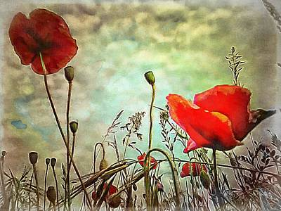 Digital Art - Poppy Highlights by Dorothy Berry-Lound