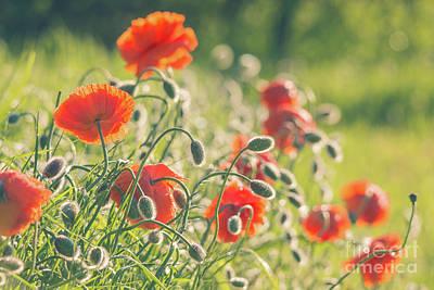 Photograph - Poppy Landscape by Cheryl Baxter
